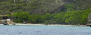 Playa Hundu, tauchen auf Curacao, Hirschgeweih Korallen